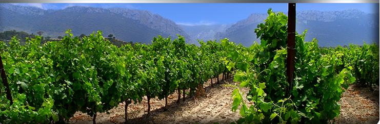 vignes terroirs d'Agly